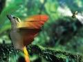 spitfire-bird