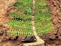 gardenworm